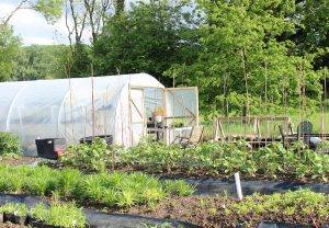 Our organic Cutting Garden at 'Lodge Farm', Ashington. IMG_1383-300x208