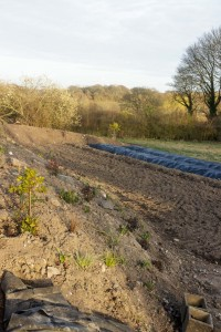 Our organic Cutting Garden at 'Lodge Farm', Ashington. IMG_7877-200x300