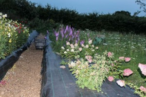 Our organic Cutting Garden at 'Lodge Farm', Ashington. IMG_8438-300x200